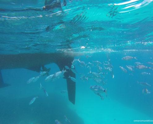 vacanze in barca a vela sardegna e corsica snorkeling lavezzi