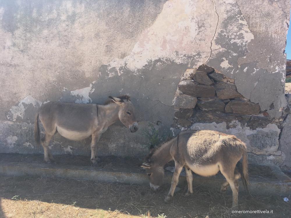 itinerario a vela da Palau ad Alghero asinelli bianchi