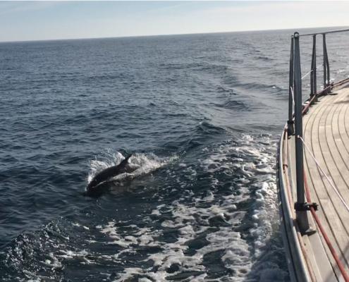 navigazione delfino